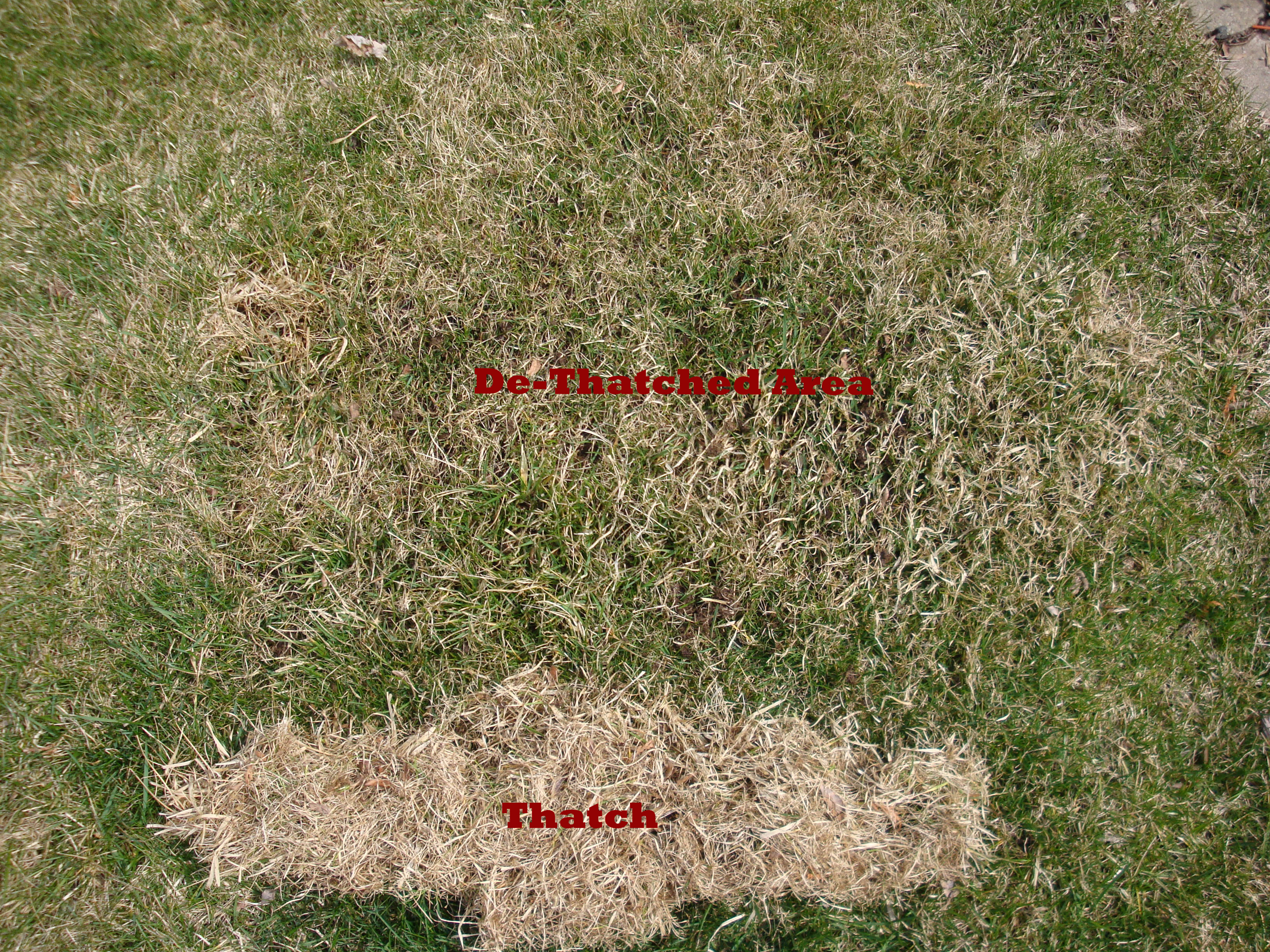 Lawn Thatching Blades : Our northern homestead