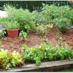 mulch_garden