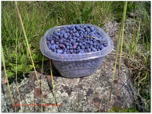 Blueberries_A