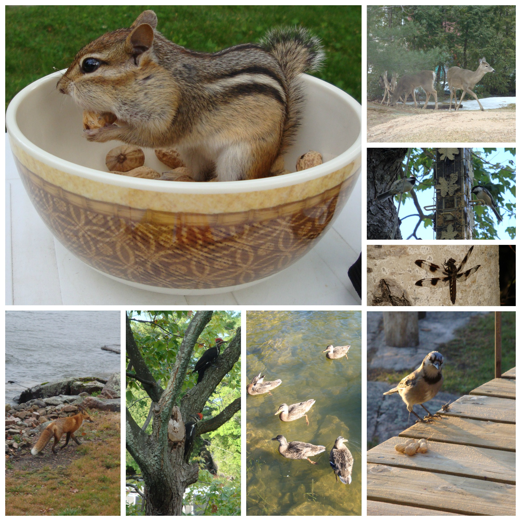 Homestead Critter Collage